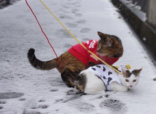 雪2blog
