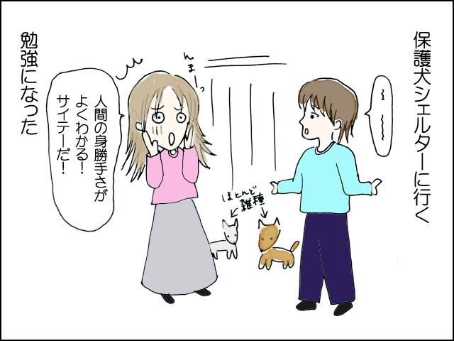 保護犬施設へ行く。勉強になった