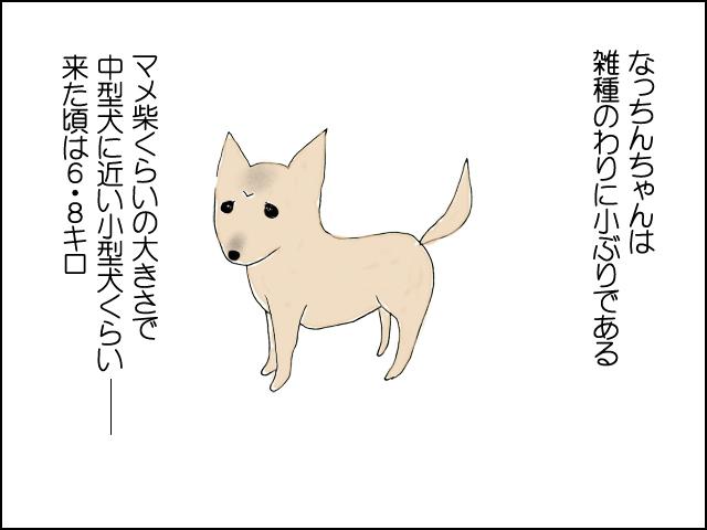 なっちんは小さい。小型犬と中型犬の間くらいで来た頃は6.8kgだった