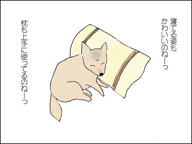 寝てる姿もかわいいね。枕も上手につかってるね