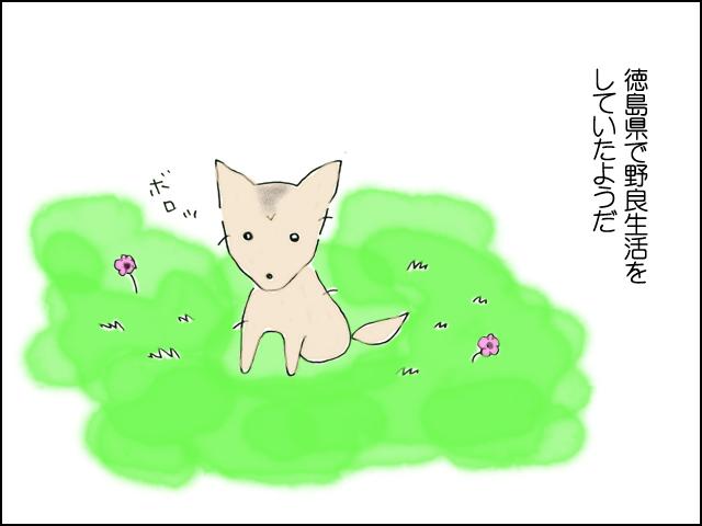徳島県で野良犬をしていた