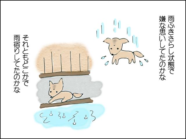 雨に濡れて移動してたのかな、それとも雨宿りしてたのかな