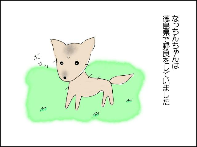 なっちんちゃんは徳島県で野良犬をしていました