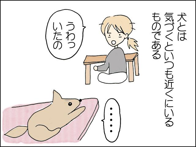 気づくといつも近くにいる犬