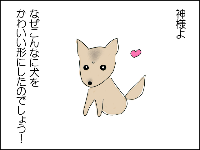 神様よ、犬をなんでこんな可愛い形にしたのでしょう