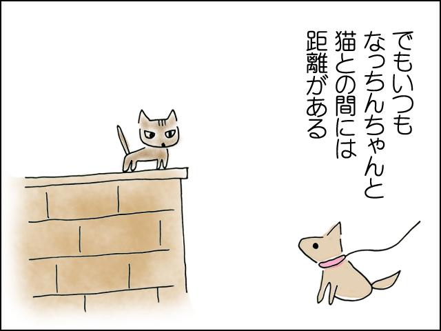 でもいつもなっちんちゃんと猫とは距離がある