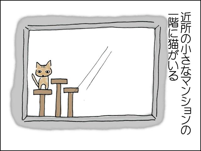 近所の小さなマンションの一階に猫がいる