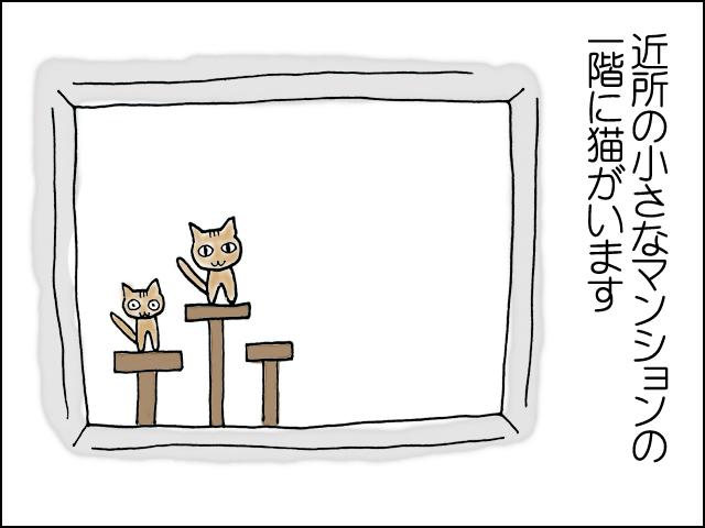 近所のマンションの一階に猫がいます