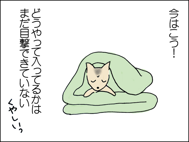 今はたたまれてるお布団の間に入って寝てます。どうやって入ってるかはまだ目撃できてません。くやしい!!