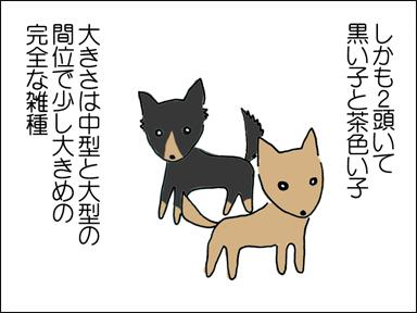 しかも2頭いて、黒い子と茶色い子。大きさは中型と大型の間くらいで、雑種