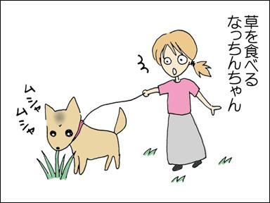草を食べるなっちんちゃん
