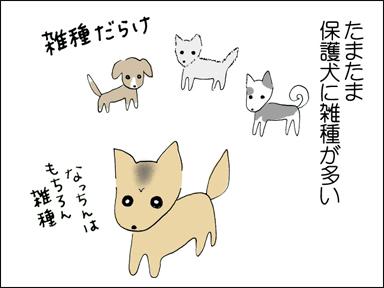 たまたま保護犬に雑種が多い