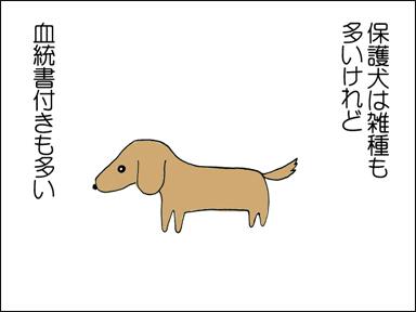保護犬は、雑種も多いけれど、血統書付きも多い