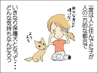 一度人と住んでた子が人の一方的な都合でいきなり保護犬となって・・・どんな気持ちなんだろう