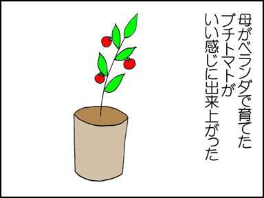 118プチトマト-1