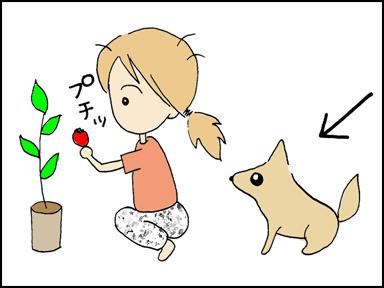 118プチトマト-4