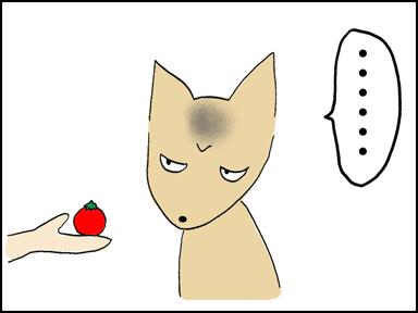 118プチトマト-7
