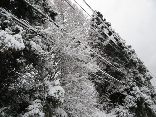 2014_2_14大雪4
