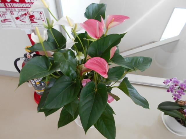 病院待合室の花①