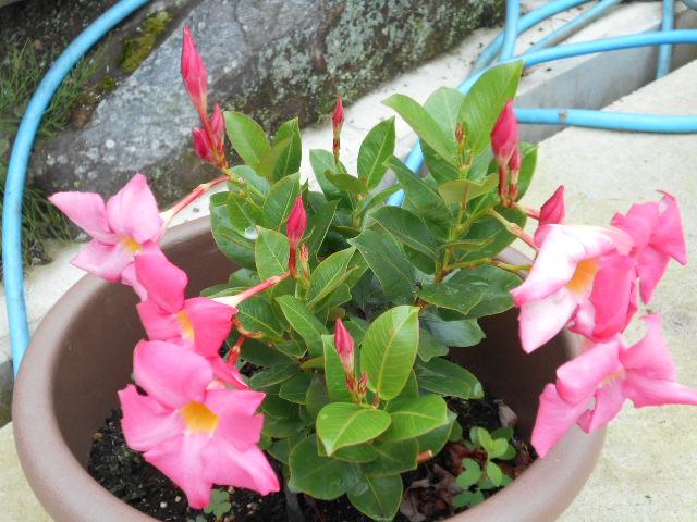 可憐に咲く花
