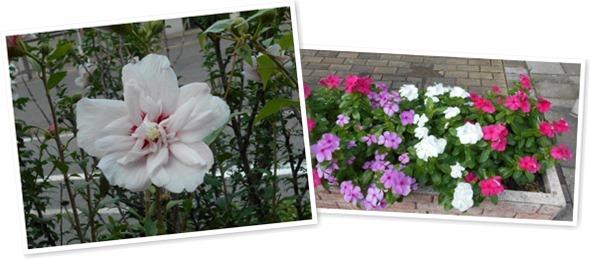 山麓公園の花