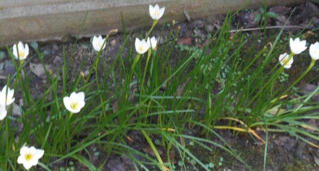 楚々と咲く花