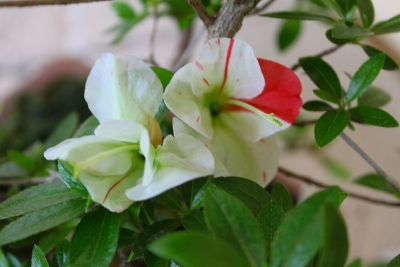 緑花の泉IMG_4422