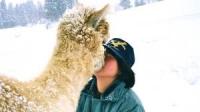 alpaca3_convert_20140816144225.jpg