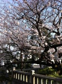 北九州市の整体院『えがお回復整体なごみ堂』  笑顔をあなたに!-桜