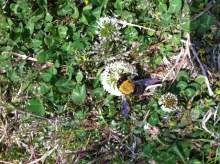 北九州市の整体院『えがお回復整体なごみ堂』  笑顔をあなたに!-がんばる蜂