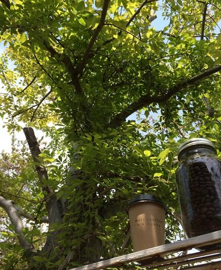 新緑の中のmooji coffee