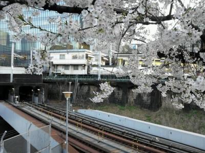 3月30日 御茶ノ水 サクラ 桜 さくら
