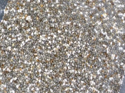 seed-01.jpg