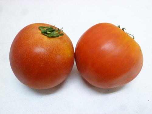 tomato-01_20140811221810695.jpg