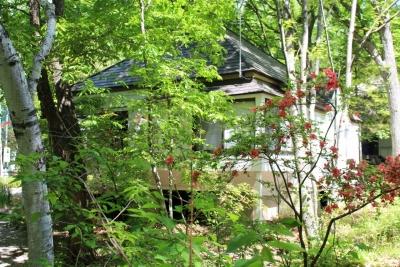 八ヶ岳わんわんパラダイス       6月1日(1) (1280x853)
