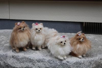 お姉さま犬の羊毛  (1) (1280x853)