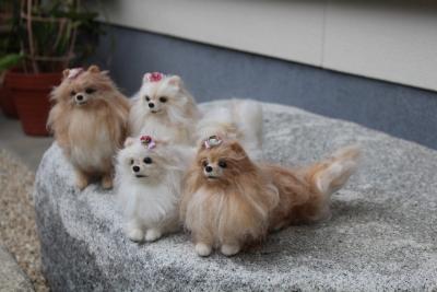 お姉さま犬の羊毛  (3) (1280x853)
