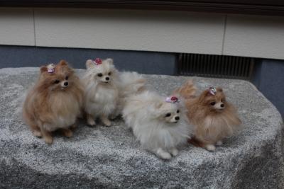 お姉さま犬の羊毛  (2) (1280x853)