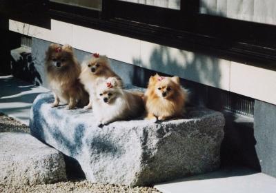 お姉さま犬達 (1280x895)