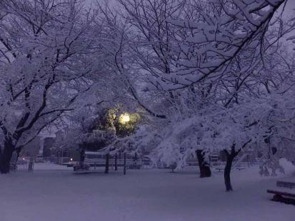 公園の外灯