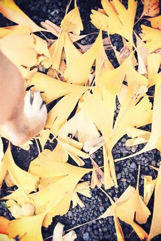 梅といっしょに。