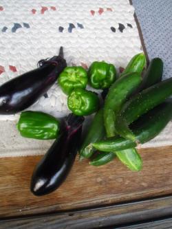 6-25収穫