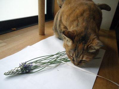 lavender03.jpg