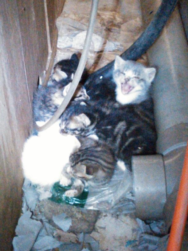 工学部子猫7匹