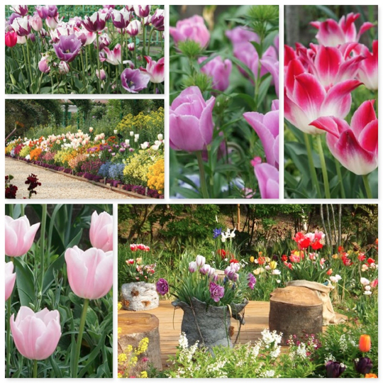 flowers_20140421191655b7a.jpg