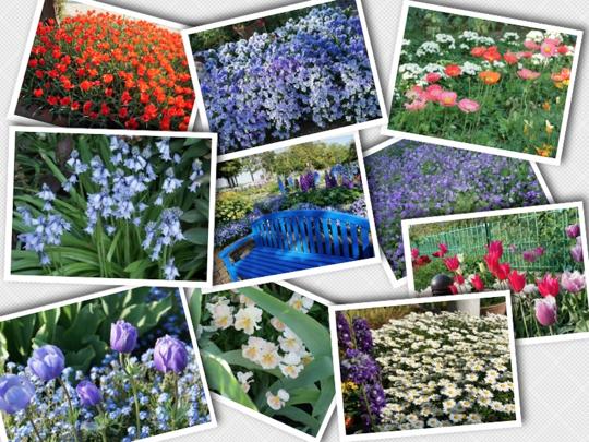 flowers_2014042523414192e.jpg
