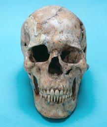 宮野貝塚頭骨