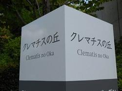 クレマチス1
