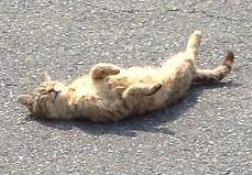 湯郷の猫2