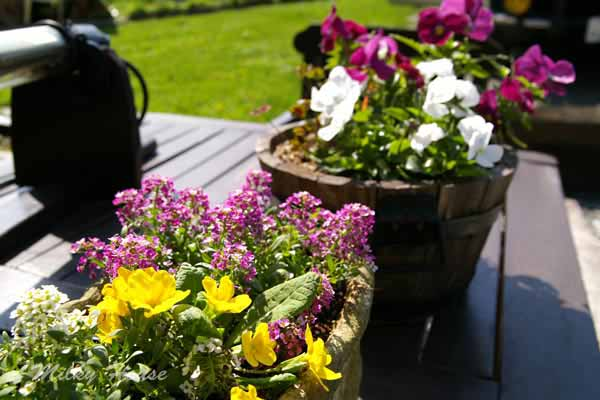 gardenE.jpg